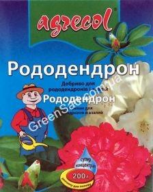 azaliya-i-uxod-v-domashnix-6usloviyax-6