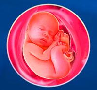 21 неделя внутриутробного развития