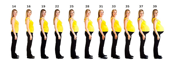 фото роста живота у беременных по месяцам