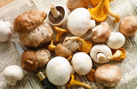 Какие грибы можно есть при диете
